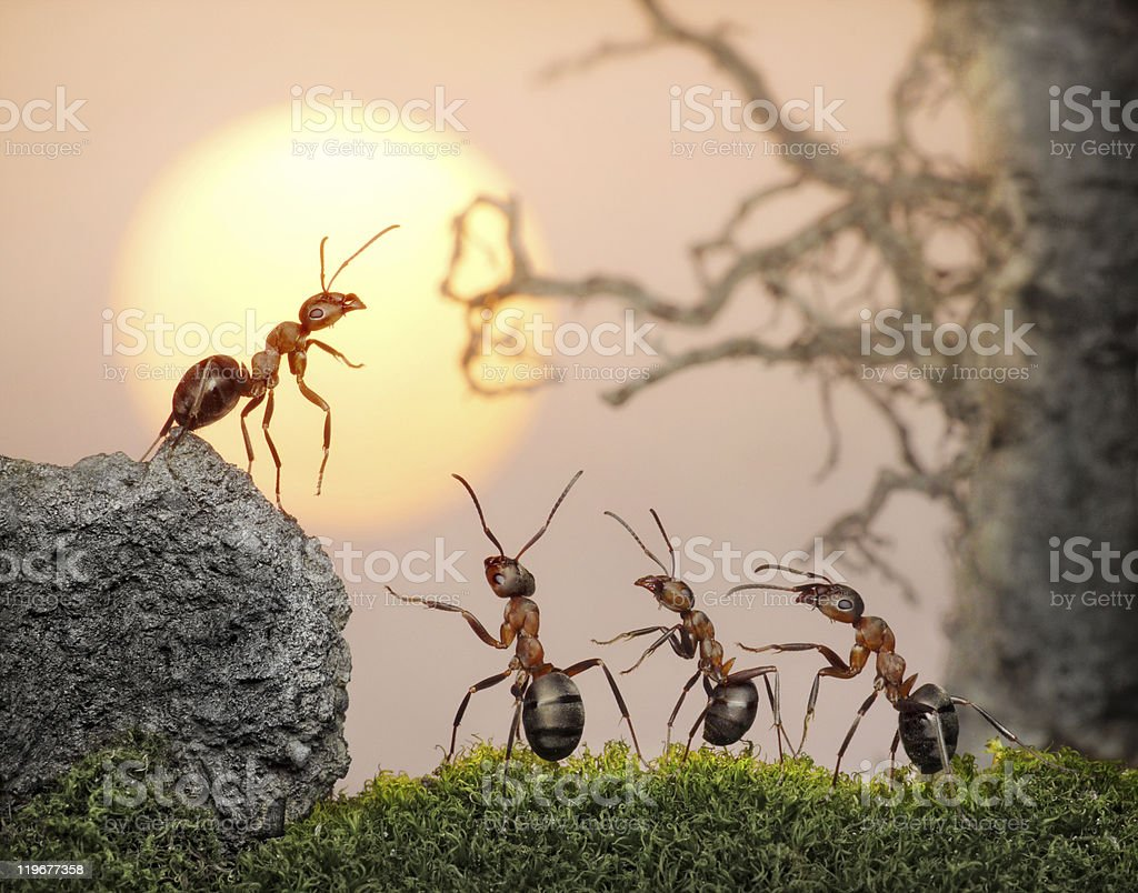 team of ants , council on sunset (or sunrise) stock photo