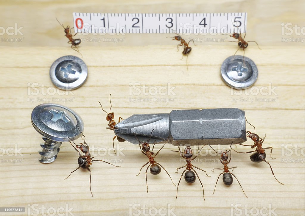 team of ants measuring with ruler and bringing screwdriver stock photo