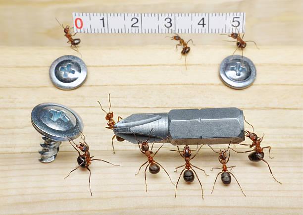 team von Ameisen messen mit Azteken und bringt Schraubenzieher – Foto