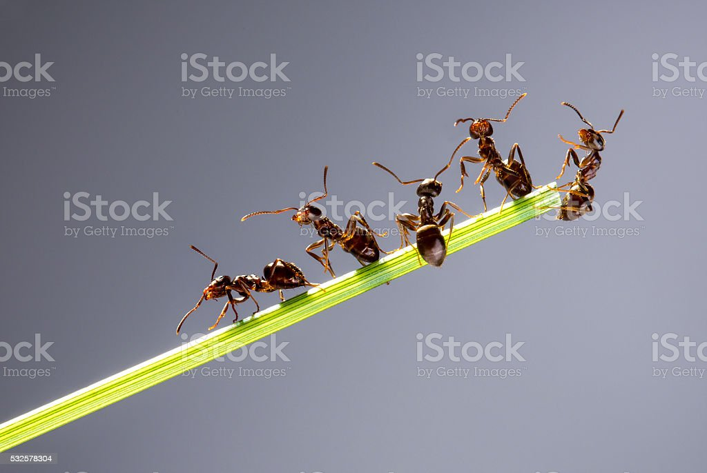 Team of ants. stock photo