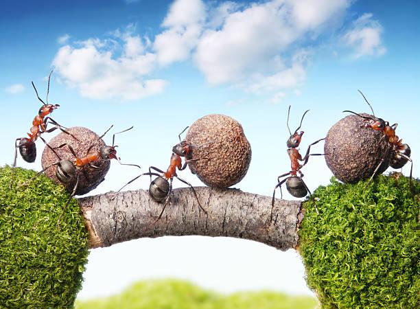 team von Ameisen rolling stones auf Brücke, Teamarbeit – Foto