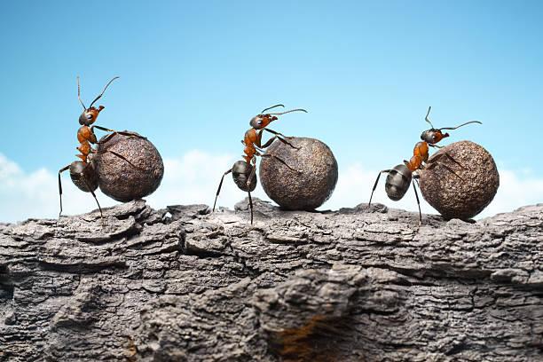 team von Ameisen rolling stones an rock, Teamarbeit – Foto