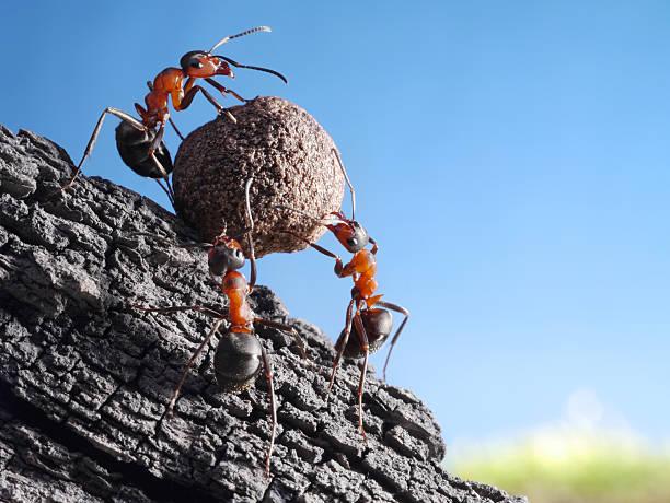 team von Ameisen rolls Stein bergauf – Foto