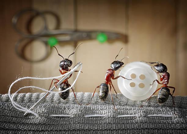 team von Ameisen tragen Nähen – Foto