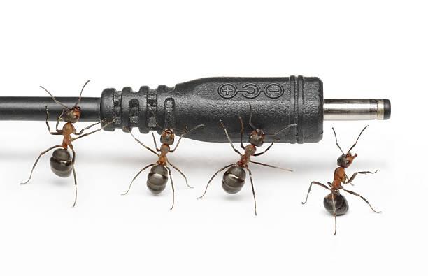 team der Ameisen arbeiten mit plug – Foto