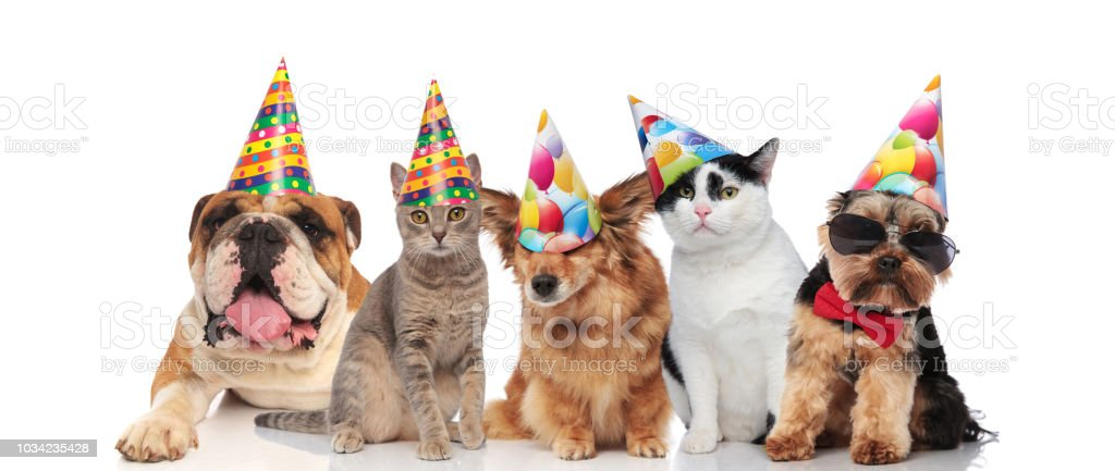 Team Of Five Cats And Dogs Ready For Birthday Party Royalty Free Stock Photo