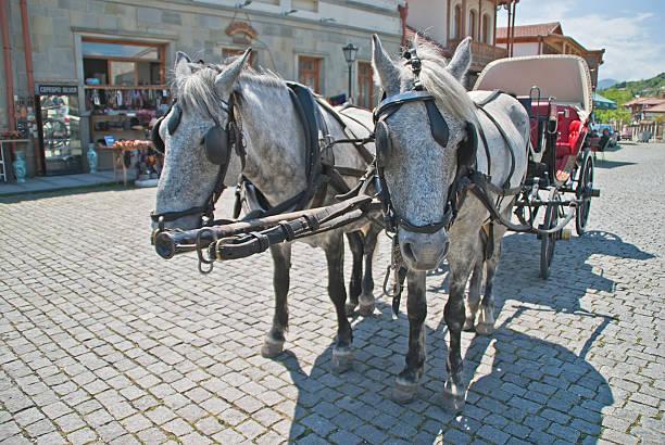 team von pferden - museum für naturkunde stock-fotos und bilder
