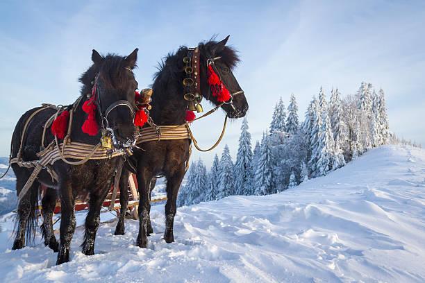 Team of horses picture id527071577?b=1&k=6&m=527071577&s=612x612&w=0&h=r zlcgnx2e1nabya7lwymbozgfwoxso w2fvppn c w=