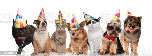 Team of seven happy pets wearing colorful birthday hats picture id1034236476?b=1&k=6&m=1034236476&s=612x612&h=1fuonpcudq0bzujvy7y znvu030s11pvw  zwk0i1r8=