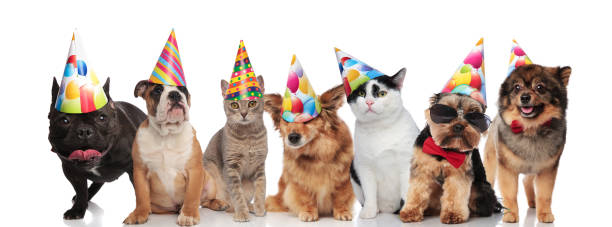 team of seven happy pets wearing colorful birthday hats - котик яркий стоковые фото и изображения