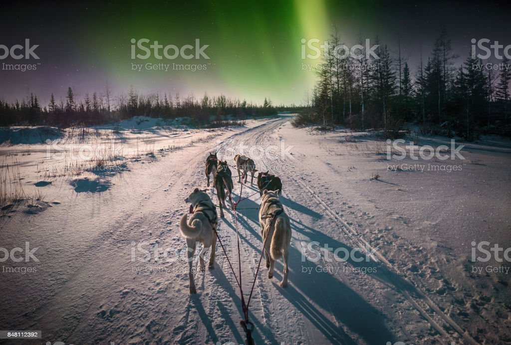 A team of six sled dogs running on a snowy road from the perspective of the sled driver. Northern lights in the sky. Northern Canada. – zdjęcie