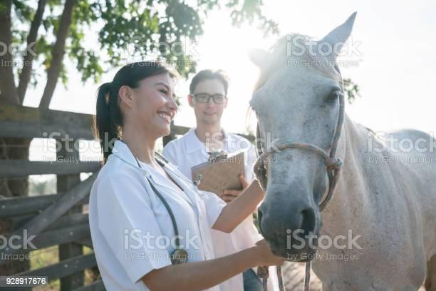 Team of vets examining a horse at a farm picture id928917676?b=1&k=6&m=928917676&s=612x612&h=ynycla7xl7quilwgxkxwtsekwekk1x2yk88ek5z1e0e=