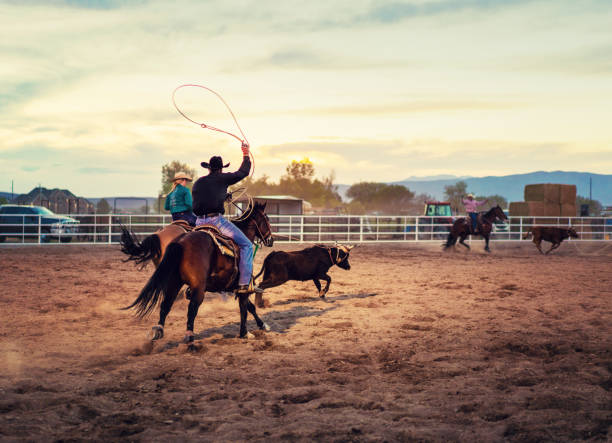 team roping rodeo action - rodeo stock pictures, royalty-free photos & images