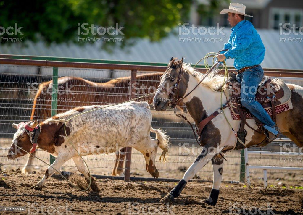 Sluts Rodeo