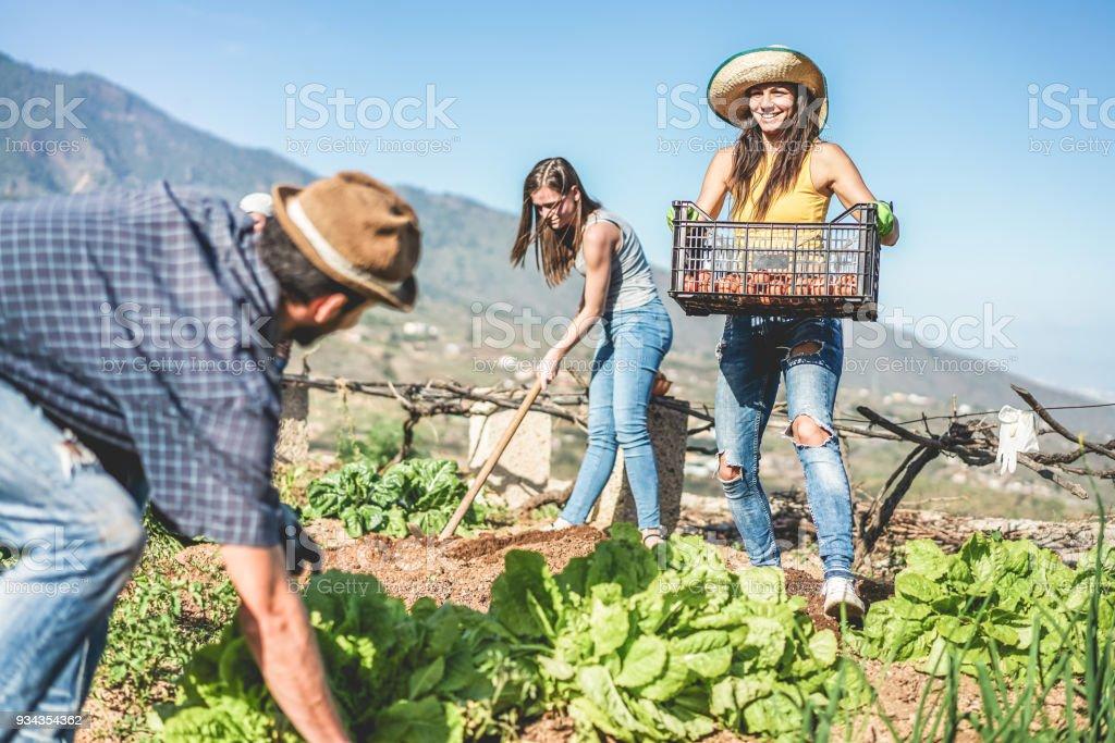 Teamarbeit, die Ernte frisches Gemüse im Gewächshaus Gemeinschaftsgarten - glückliche junge Menschen am Arbeitsplatz Abholung vegetarische Bio - Fokus auf Frau Hände Handschuhe - gesunde Lifestyle-Konzept – Foto