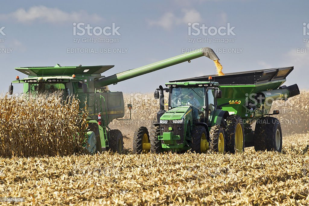 Teamwork is required to harvest corn stock photo