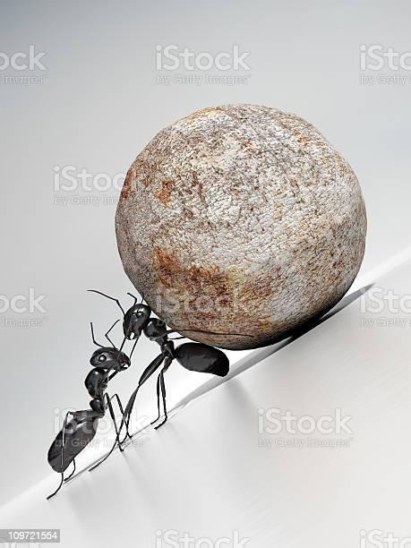 Teamwork Stockfoto und mehr Bilder von Ameise