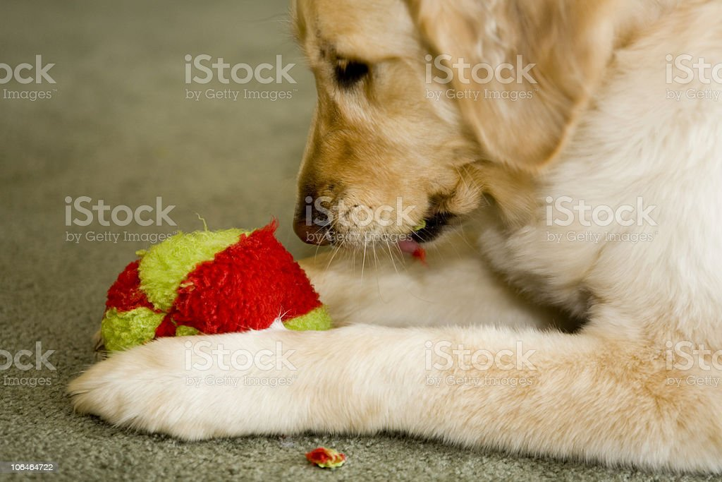 Tearing Up the Ball royalty-free stock photo