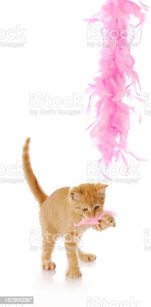 Teasing kitten picture id152950097?b=1&k=6&m=152950097&s=612x612&h=wgb dkk7wjlbhkqibjkljzvcqdvys4trb0jdnpuduyu=