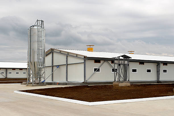 Salle technique pour les porcs sur un jour de pluie - Photo
