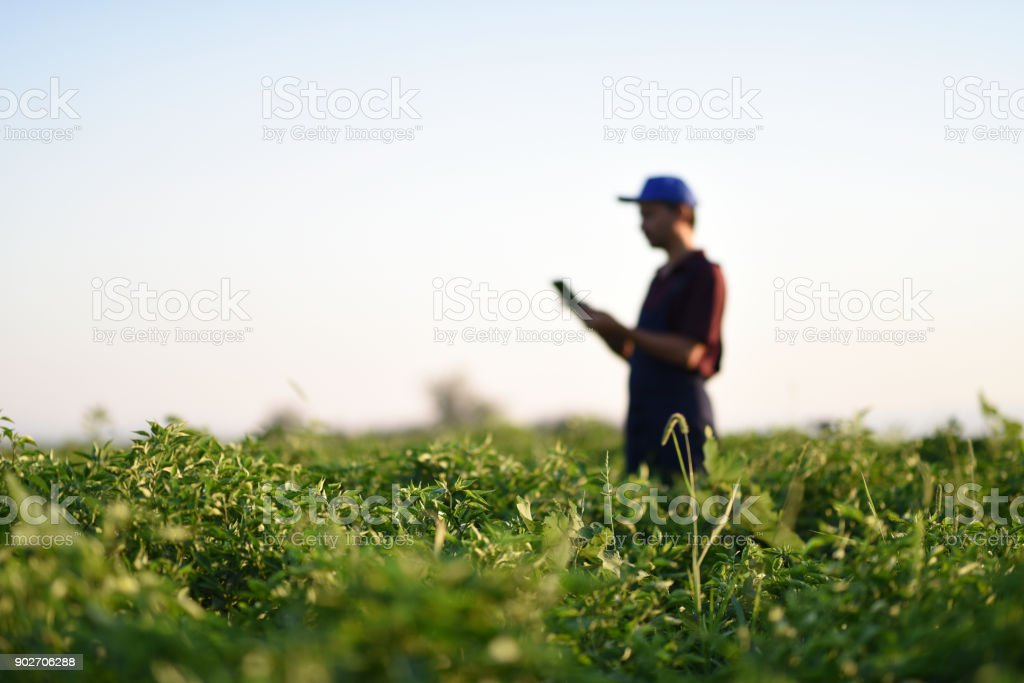 Technology is key to increasing agriculture productivity stock photo