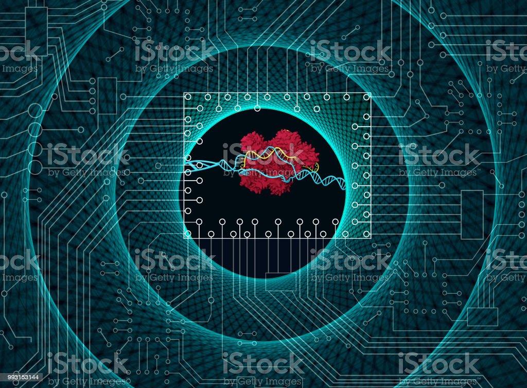 CRISPR technology royalty-free stock photo