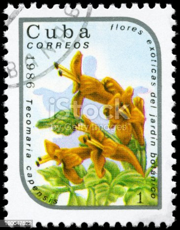 A Stamp printed in CUBA shows image of a Tecomaria capensis, from the series