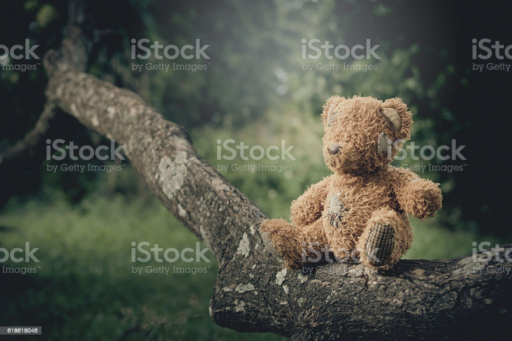 Teddy Bear  alone on tree in the park stock photo