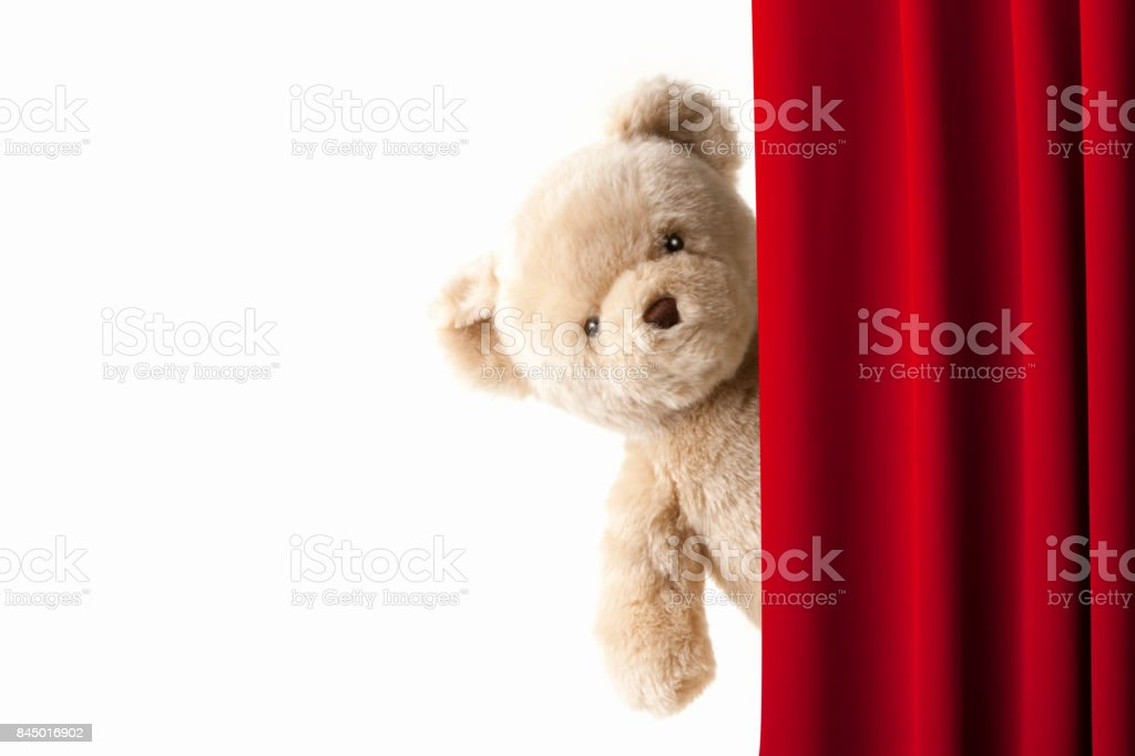Teddy bear face out of the stage curtain stock photo