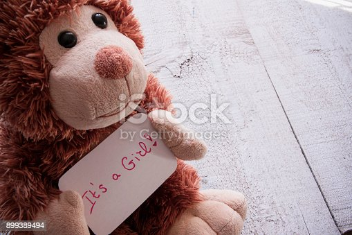 508167718 istock photo Teddy bear holds an announncement card for baby girl, space for text 899389494