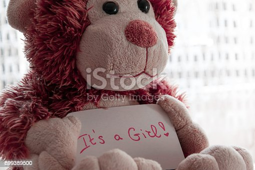 508167718 istock photo Teddy bear holds an announncement card for baby girl, space for text 899389500