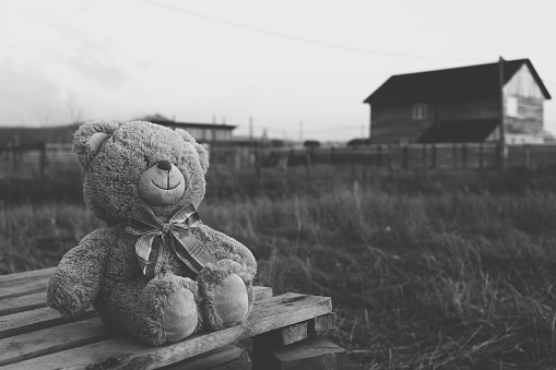 Teddy bear in countryside. Black and white toned image