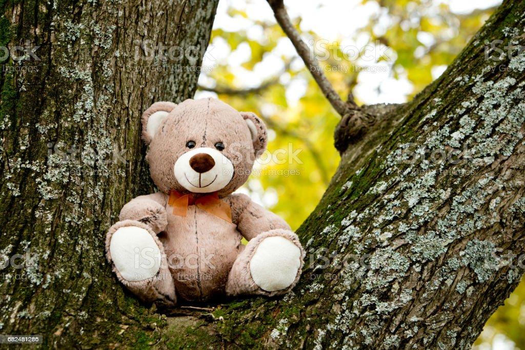 Teddy Bear in tree royalty-free stock photo