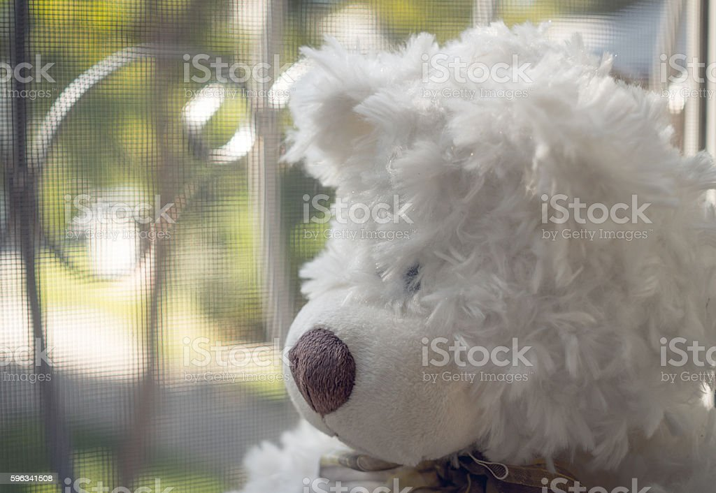 Teddy bear looking out of the window royalty-free stock photo