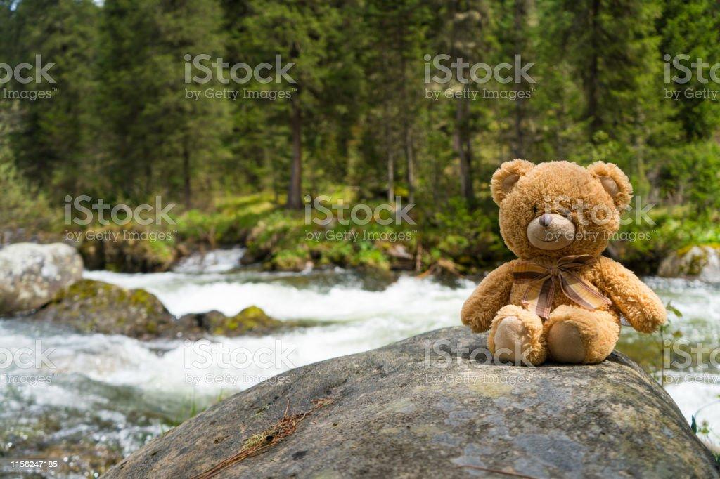 Teddy bear on the shore of mountain creek