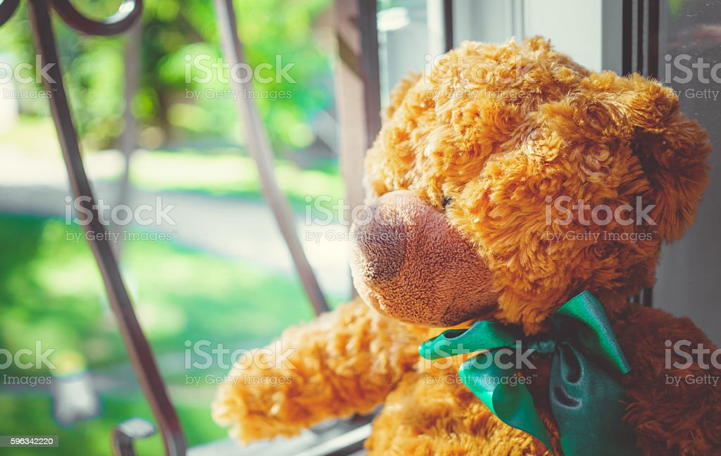Teddy bear peeping in the window royalty-free stock photo