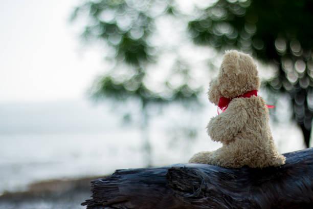 Teddy Teddybär  – Foto