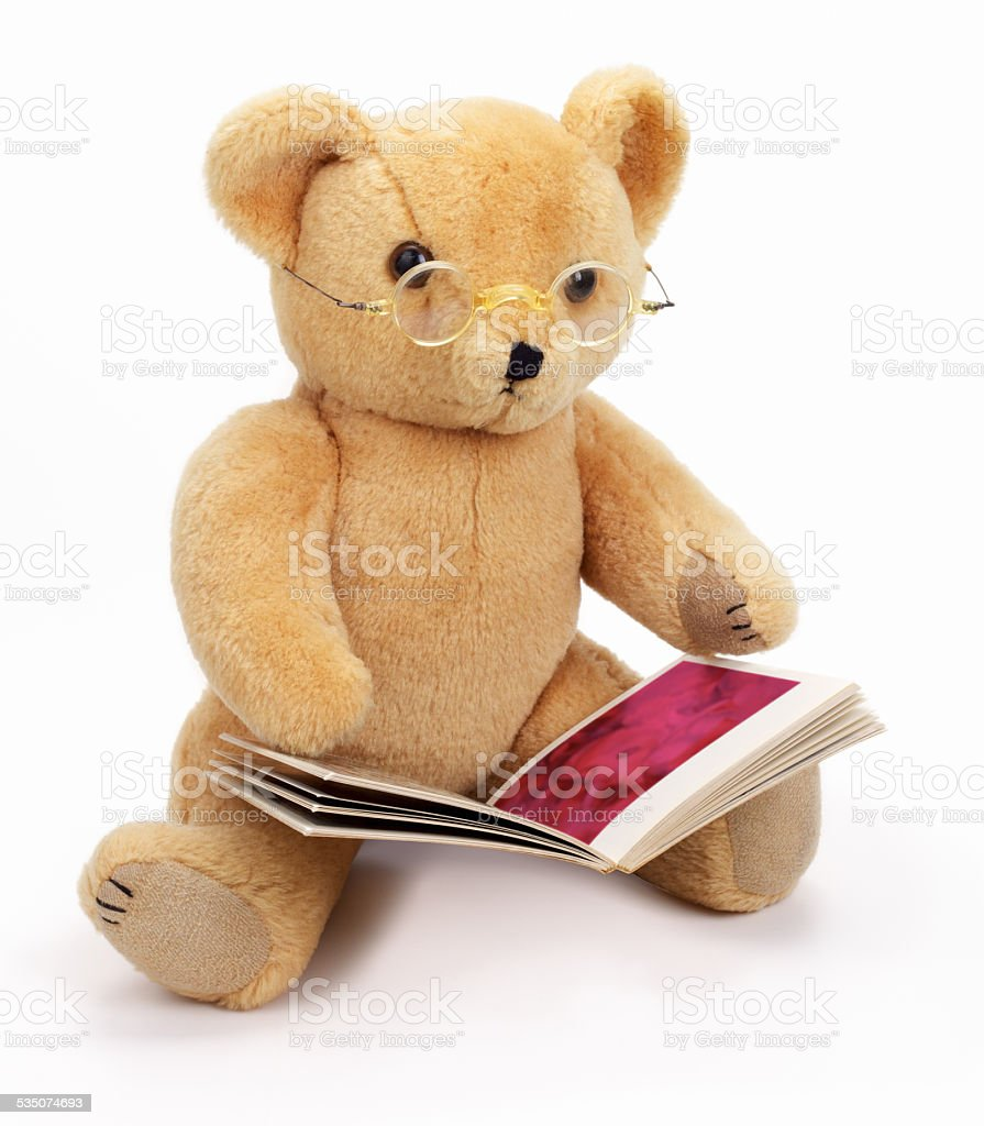 Image result for bear reading a book
