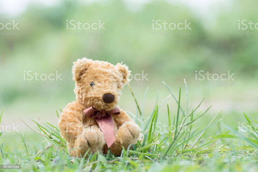 Teddy bear sitting on the grass royalty-free stock photo