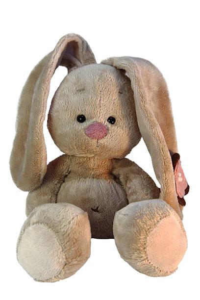 teddy bunny stock photo