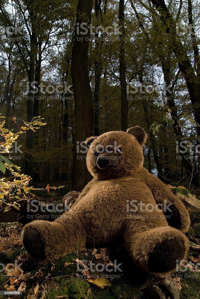 teddy im Wald – Foto