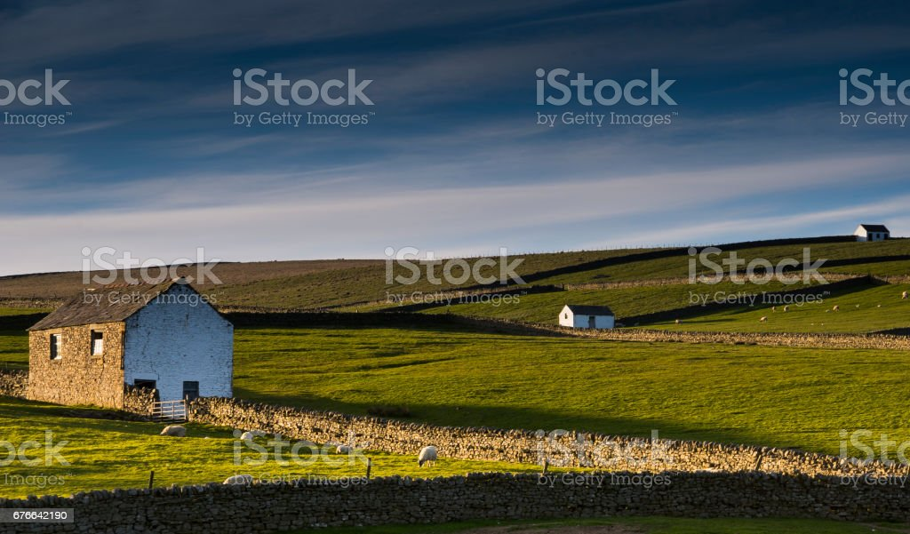 Teeesdale Sheep Farming stock photo