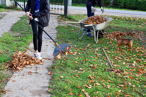 Teen Boy And Girl Raking Dry Autumn Leaves Stock Photo - Download Image Now