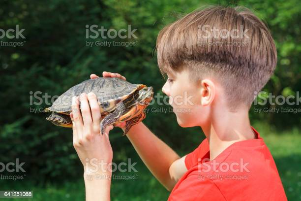 Teen boy face to face with turtle outdoor picture id641251088?b=1&k=6&m=641251088&s=612x612&h=veqe6dqqdnzinkm2whmeb l7h4f 7iufbywlrww0yfa=