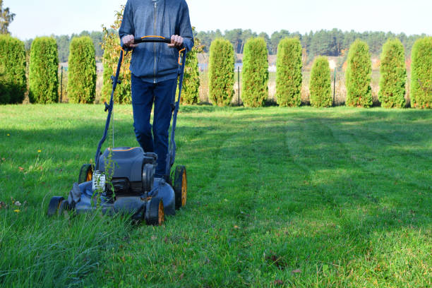 Teen boy mowing lawn grass Teen boy mowing lawn grass in yard with lawnmower decorative plants thuja hedge and pine forest on background in autumn day. Children helping in householding and seasonal garden work concept. mowing stock pictures, royalty-free photos & images
