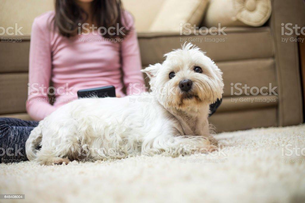 Teen girl and dog stock photo