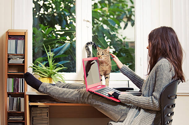 Teen girl with cat and laptop picture id155142409?b=1&k=6&m=155142409&s=612x612&w=0&h=mjlue4sddlflk5w5imooeyqwdldqvyxbv6ttudfw3 8=