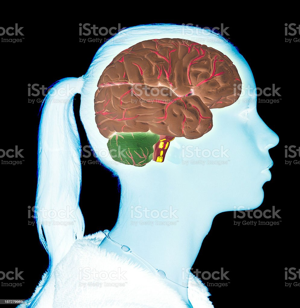 Teen girl's brain stock photo