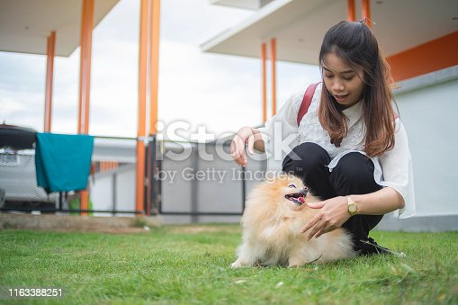 istock Teen woman playing with pomperanian dog in the home, aisan woman 1163388251