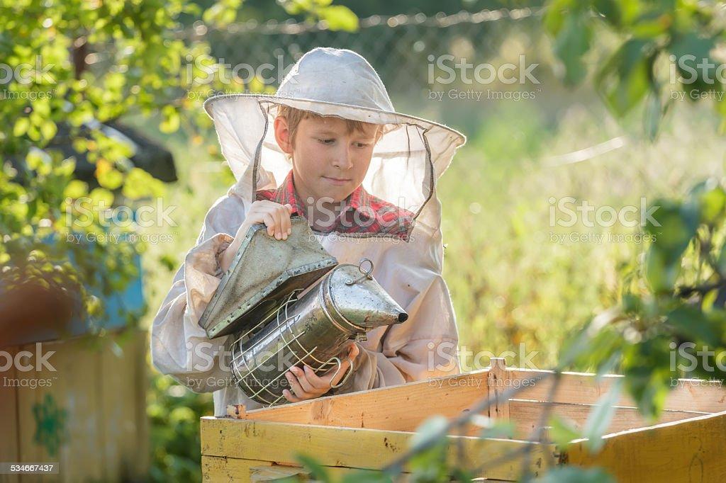 Teenage beekeeper smoking hive in bee yard stock photo